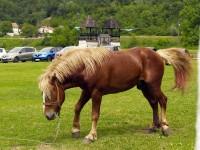 Koliko ima konjskih snaga ?